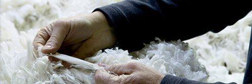 Die Hand an der Wolle