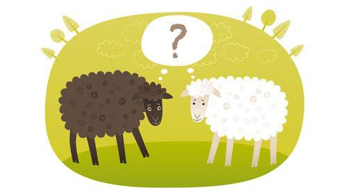 Zwei schafe bekommen häufig gestellte Fragen zu hören